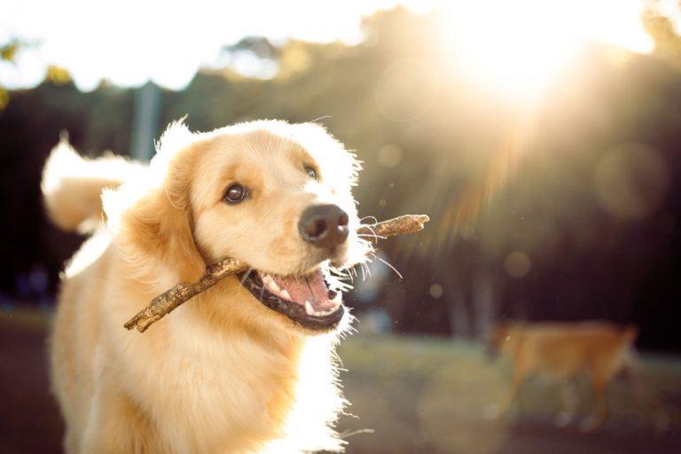 Perro - Significado Y Simbolismo De Los Sueños 1