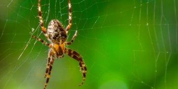 Araña - Significado Y Simbolismo De Los Sueños 121