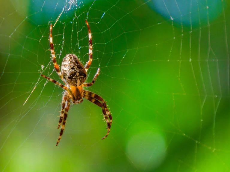 Araña - Significado Y Simbolismo De Los Sueños 1