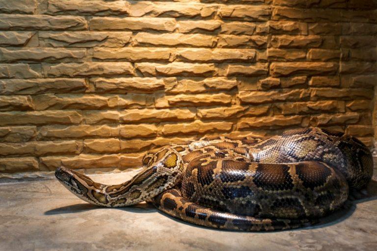 Serpiente Grande – Significado Y Simbolismo De Los Sueños 1