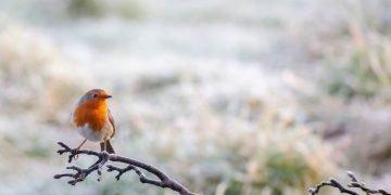 Pájaro - Significado Y Simbolismo De Los Sueños 49
