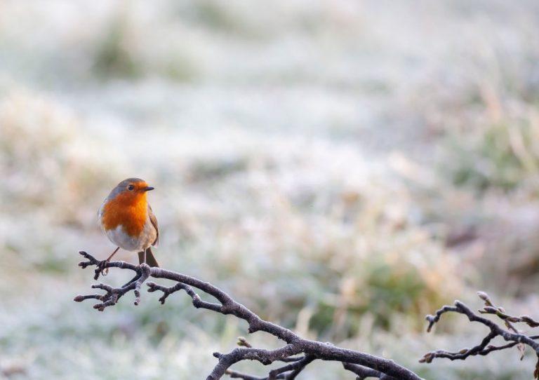 Pájaro - Significado Y Simbolismo De Los Sueños 1