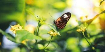 Mariposa – Significado Y Simbolismo De Los Sueños 74