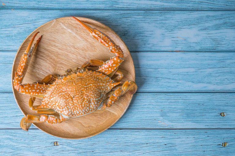 Cangrejo – Significado Y Simbolismo De Los Sueños 1