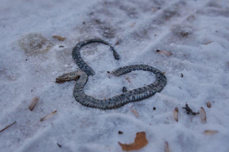 Serpiente Muerta – Significado Y Simbolismo De Los Sueños 1