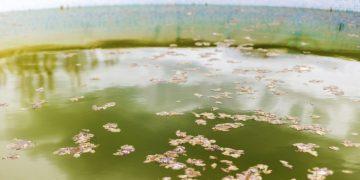 Agua Sucia – Significado Y Simbolismo De Los Sueños 36