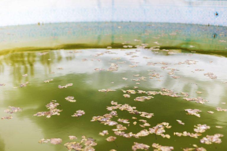 Agua Sucia – Significado Y Simbolismo De Los Sueños 1