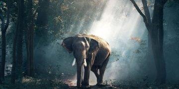 Elefante – Significado Y Simbolismo De Los Sueños 82