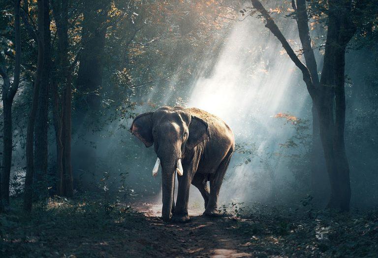 Elefante – Significado Y Simbolismo De Los Sueños 1