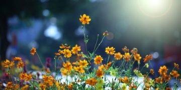 Flores – Significado Y Simbolismo De Los Sueños 50