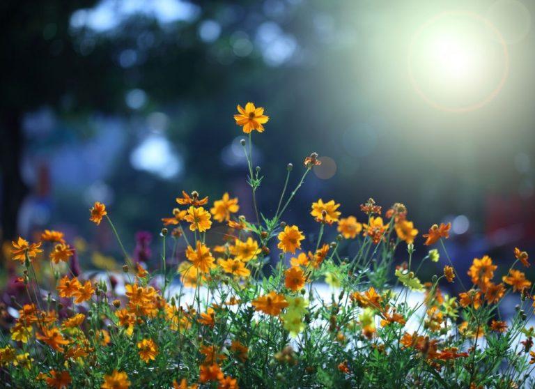 Flores – Significado Y Simbolismo De Los Sueños 1
