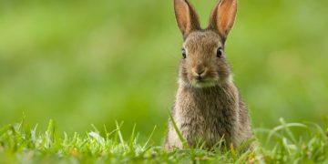 Conejo – Significado Y Simbolismo De Los Sueños 78