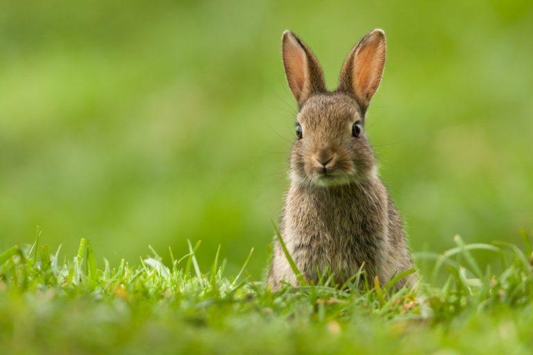Conejo – Significado Y Simbolismo De Los Sueños 1