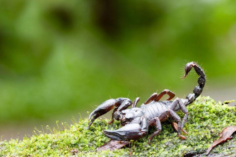 Escorpión – Significado Y Simbolismo De Los Sueños 1