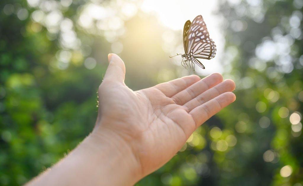 Mariposa – Significado Y Simbolismo De Los Sueños 3