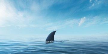Tiburón - Significado Y Simbolismo De Los Sueños 66