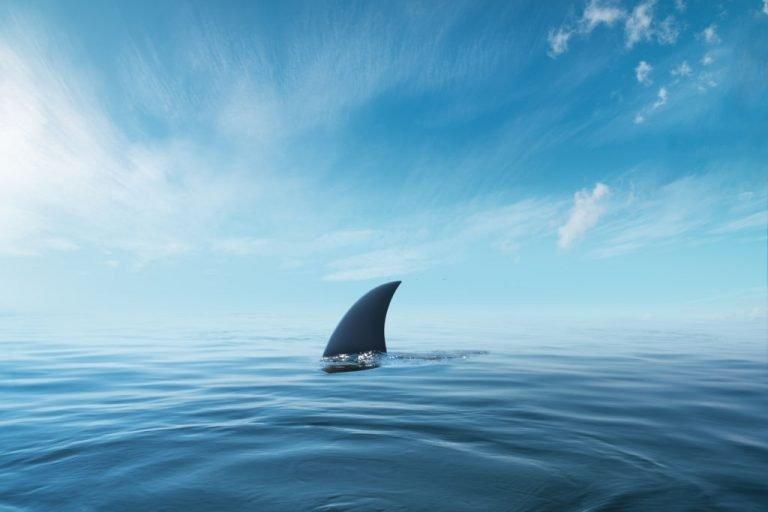Tiburón - Significado Y Simbolismo De Los Sueños 1