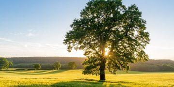 Árbol – Significado Y Simbolismo De Los Sueños 56