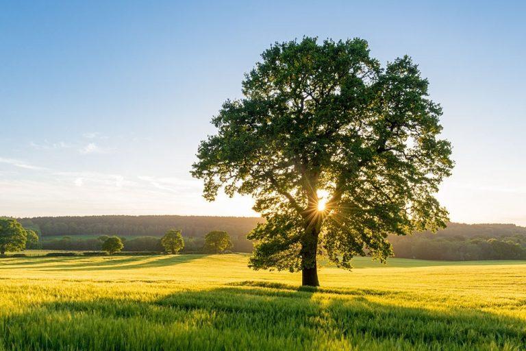 Árbol – Significado Y Simbolismo De Los Sueños 1