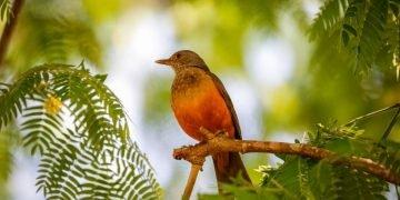 Pájaro – Significado Y Simbolismo De Los Sueños 20