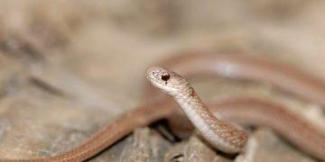 Serpiente marrón - Significado y simbolismo del sueño 9
