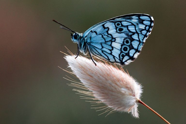 Mariposa – Significado Y Simbolismo De Los Sueños 1