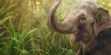Elefante – Significado Y Simbolismo De Los Sueños 8