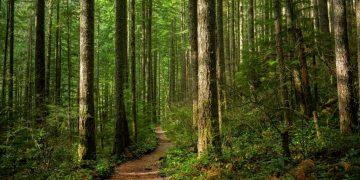 Bosque – Significado Y Simbolismo De Los Sueños 14