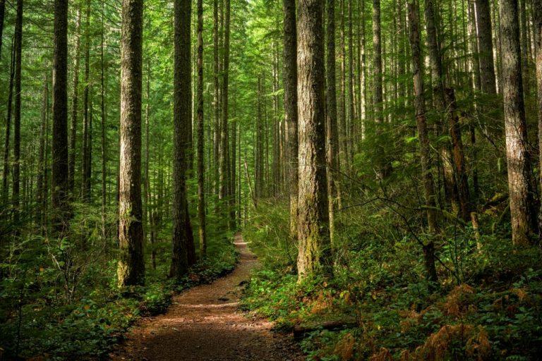 Bosque – Significado Y Simbolismo De Los Sueños 1