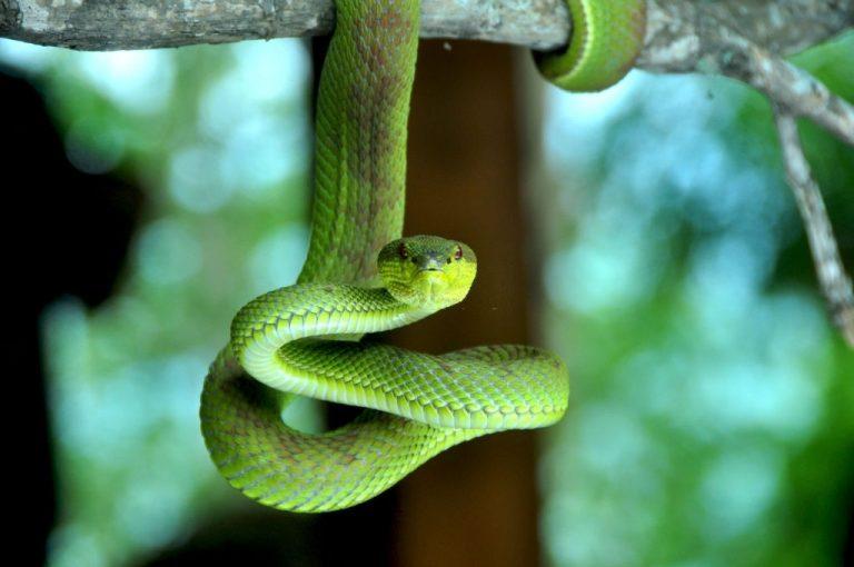 Serpiente Verde – Significado Y Simbolismo De Los Sueños 1