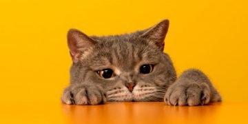Gato Gris – Significado Y Simbolismo De Los Sueños 24