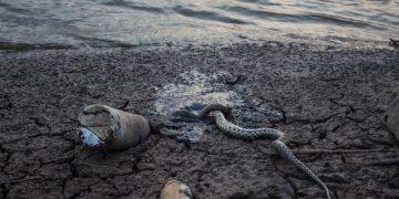 Killed A Snake?