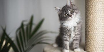 Gatito – Significado Y Simbolismo De Los Sueños 14