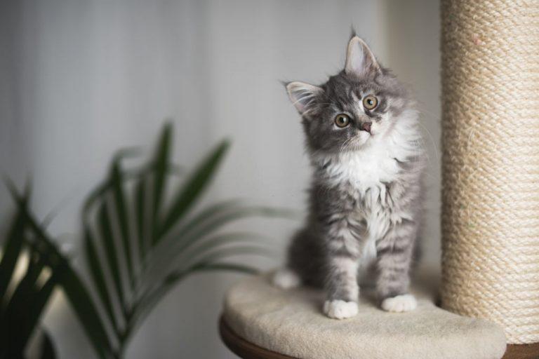 Gatito – Significado Y Simbolismo De Los Sueños 1