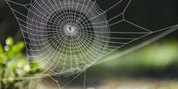 Tela De Araña – Significado Y Simbolismo De Los Sueños 30