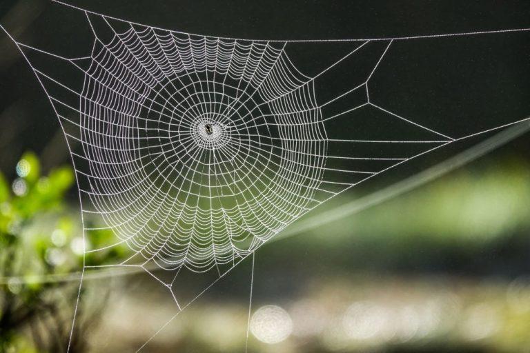 Tela De Araña – Significado Y Simbolismo De Los Sueños 1
