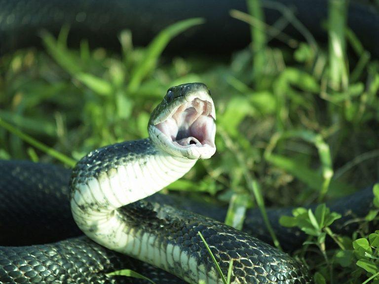 Serpiente De Picadura – Significado Y Simbolismo De Los Sueños 1