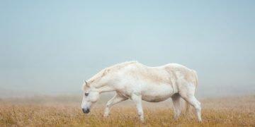 Caballo Blanco – Significado Y Simbolismo De Los Sueños 10