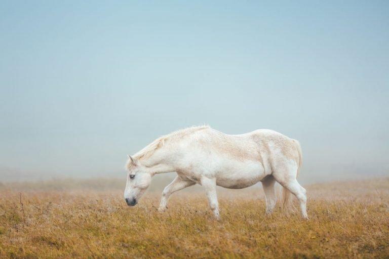 Caballo Blanco – Significado Y Simbolismo De Los Sueños 1