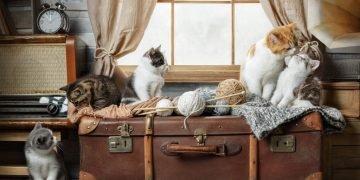 Muchos Gatos – Significado Y Simbolismo De Los Sueños 28