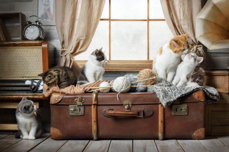 Muchos Gatos – Significado Y Simbolismo De Los Sueños 1