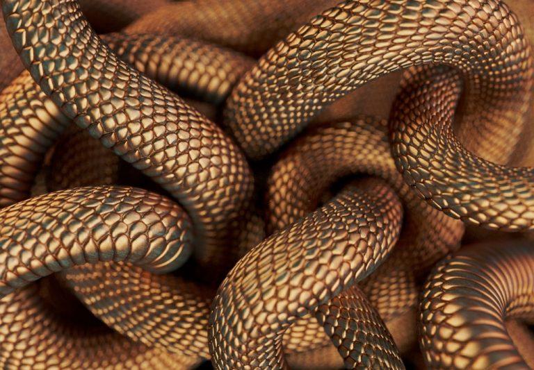 Muchas Serpientes – Significado Y Simbolismo De Los Sueños 1